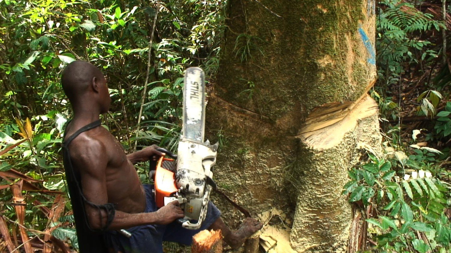"Bikpela Bagarap is a documentary revealing the ""human face"" of logging in Papua New Guinea and the devastating consequences of this environmental destruction."